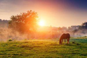 Parker Colorado Equestrian Community